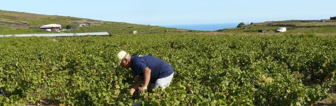 vigneti pantelleria (10)